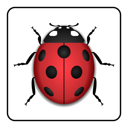 Ladybug small icon. Red lady bug sign, isolated on white background. 3d volume design. Cute colorful ladybird. Insect cartoon beetle. Symbol of nature, spring or summer.