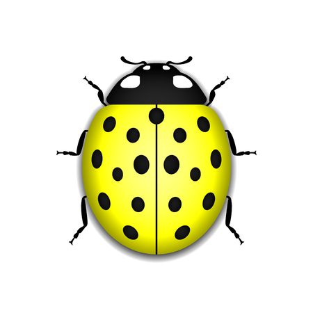 Ladybug small icon. Yellow lady bug sign, isolated on white background. 3d volume design. Cute colorful ladybird. Insect cartoon beetle. Symbol of nature, spring or summer.