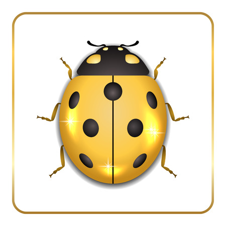 Ladybug gold insect small icon. Golden metal lady bug animal sign, isolated on white background. 3d volume bright design. Cute shiny jewelry ladybird. Lady bird closeup beetle. Illustration