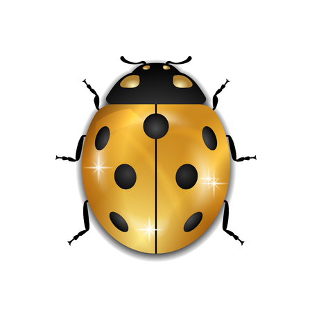 Ladybug gold insect small icon. Golden lady bug animal sign, isolated on white background. 3d volume design. Cute jewelry ladybird design. Cartoon lady bird closeup beetle Vector illustration Illustration