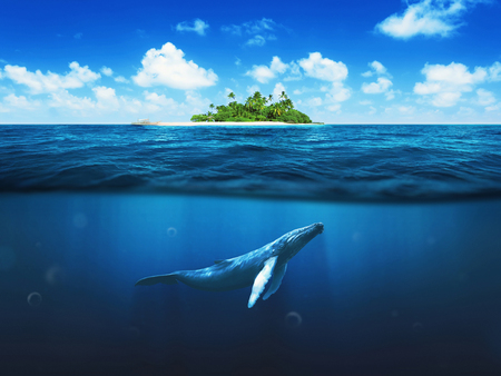 blue sea: Beautiful island with palm trees. Whale underwater
