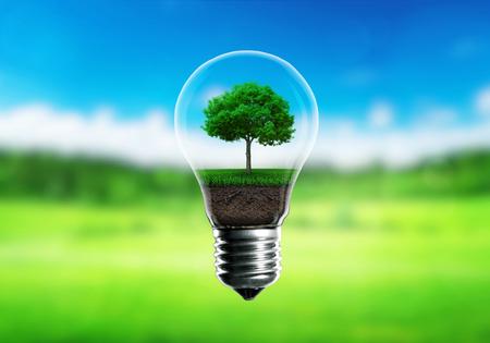 Green seedlings in a light bulb alternative energy concept, green blurred background.