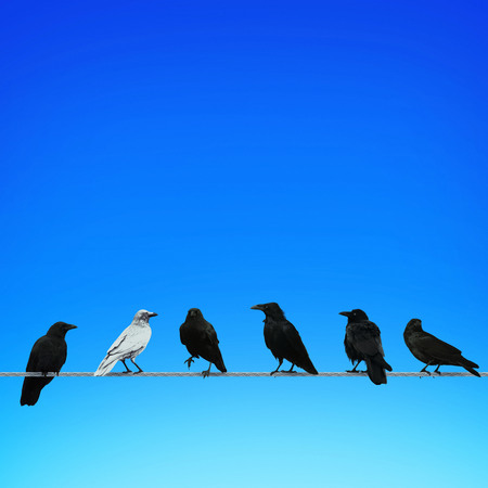 White crow and black crows. Different concept Stock Photo