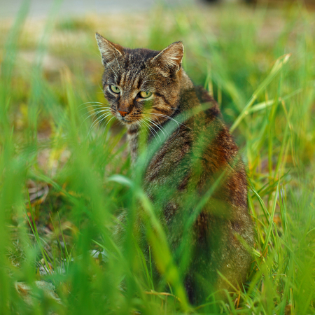 Tabby cat sits in the grass Stock Photo