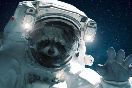 Spaceman raccoon in a spacesuit waves his hand. Animal in outer space, concept