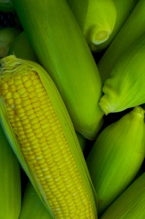 mais: Corn Stock Photo