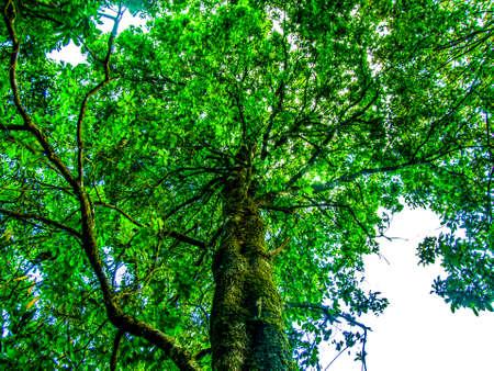 leafy: Green leafy tree f Um invited enjoyable .