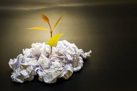 Little plant grow up on Crumpled paper in concept everything is posible if you do it Stock Photo