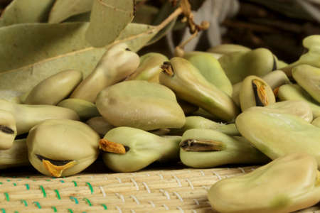 broad: Organic broad beans in drying process