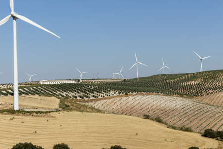 olive groves: Landscape with windmills, pasture, olive groves and a farm