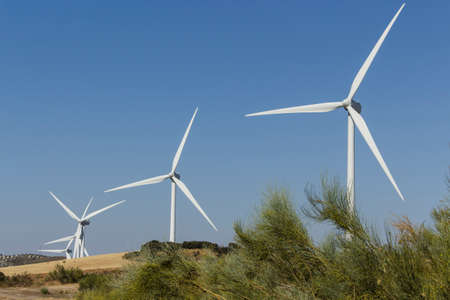 eolian: Branches of broom in the foreground with wind farm in the background Stock Photo