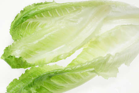lactuca: Close-up of romaine lettuce leaves, backlit