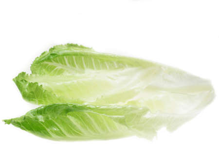 lactuca: Several romaine lettuce leaves, with blank space on top