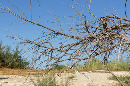 rainless: Detail of dried branches of a shrub