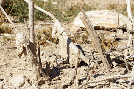 rainless: Remains of fully dry vegetation, covered by salt