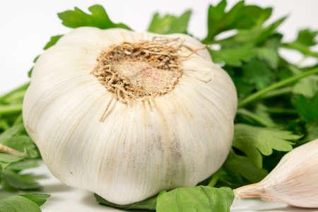 petroselinum sativum: Garlic bulb beside fresh parsley, on white