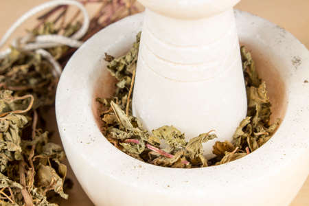 dry leaves: Grinding dry leaves of pennyroyal with a marble mortar and pestle