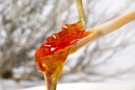 Thyme honey jet falling into a wooden spoon. Thyme shrub at background Stockfoto