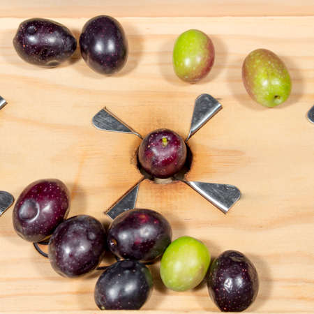 slit: Naturally black-ripe olive in steel blades of a traditional wooden slitter for preparing seasoned slit olives