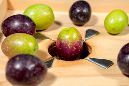 seasoned: Olives with different shades of color and ripening on a traditional wooden slitter for preparing seasoned slit olives Stock Photo