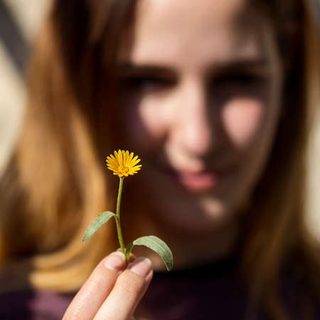 on yellow daisy: Yellow daisy into the fingers of a young woman