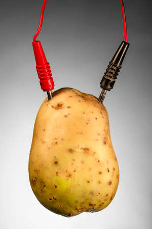 cathode: Potato as source of energy, on gray background