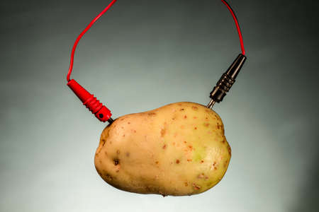 Potato as source of power. Energy crops Stock Photo