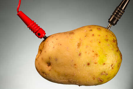 Potato as source of power, on gray background. Energy crops