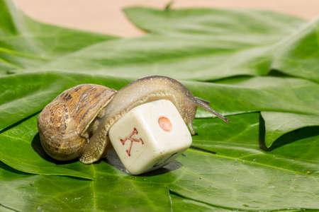 Garden snail throwing dice