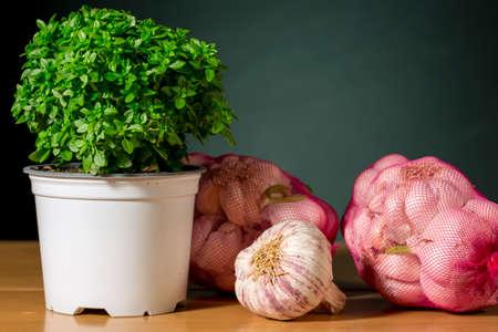 Basil plant beside garlic bulbs. Flavour condiments.