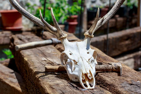 Deer skull and pickaxe over wooden beams