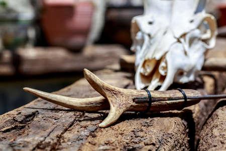 hick: Detail of knifes handle made with deer antler in front of cervid skull