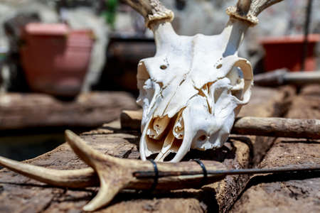 Deer skull behind a rustic knife with handle made of cervid antler