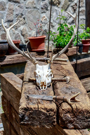 sylvan: Deer skull with antlers beside a rustic knife, over a pile of wooden beams Stock Photo