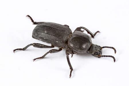 Small black beetle isolated on white. Macro Photography
