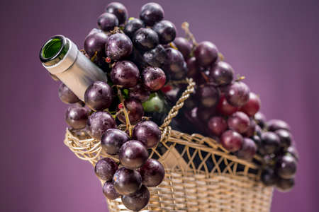 Red grapes over an open bottle of Rioja wine that is into a tabletop wine rack, on purple background