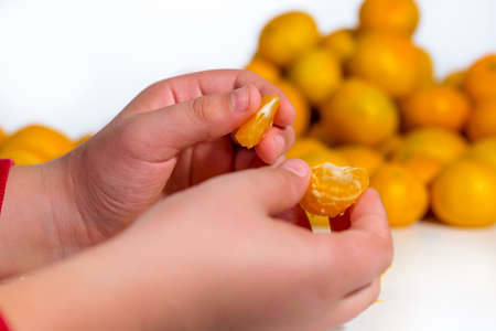 vesicles: Detail of the hands of a kid that is eating an orange tangerine. Heap of citrus fruits at white background Stock Photo