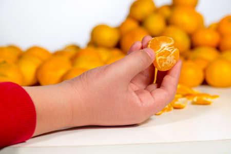 vesicles: Hand of a kid over a white table holding a peeled clementine, in front of heap of citrus fruits
