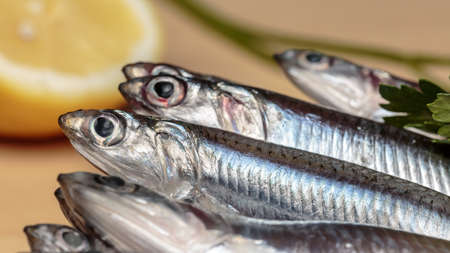 European anchovies at kitchen. Seafood
