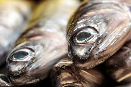 Macro view of raw anchovy. Seafood Stock Photo