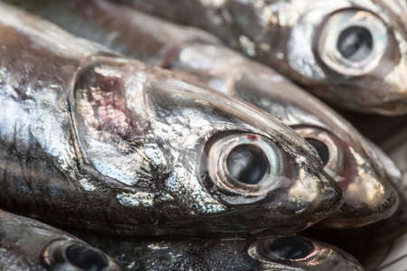 Macro view of fresh Mediterranean anchovy. Seafood Stock Photo