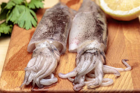 Close-up of fresh squids at kitchen. Cooking cuttlefishes