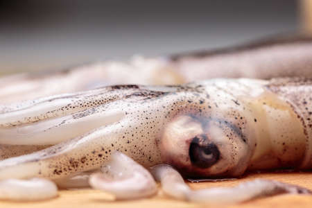 Macro view of eyes and tentacles of a raw squid