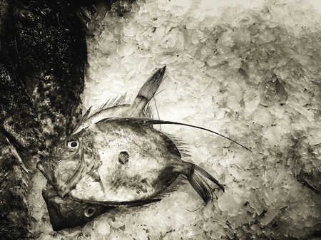 Fresh fish in the market showcase Фото со стока