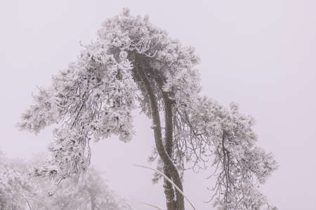 very cold: In winter, snow Wugongshan full, very cold