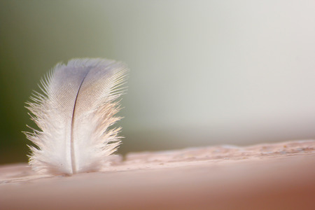 A macro shot with feather 版權商用圖片