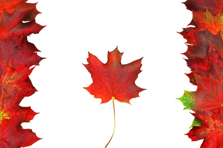 Canadian flag made from maple red leaves Stock Photo - 15676028