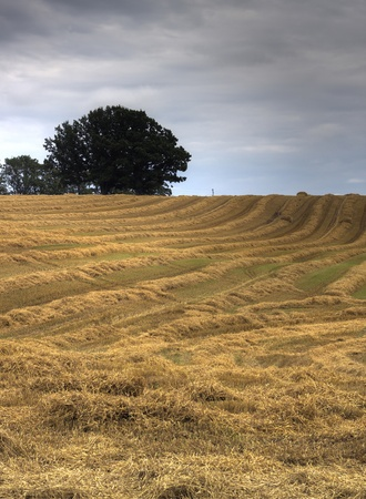 Yellow straw strips on hill under the cloudy sky Stock Photo - 15676877