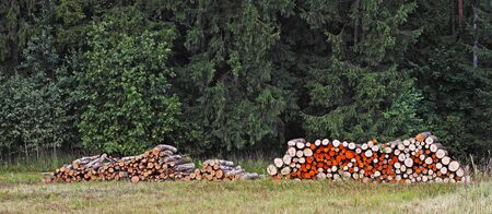 Colorful wood log stacks on the forest background photo