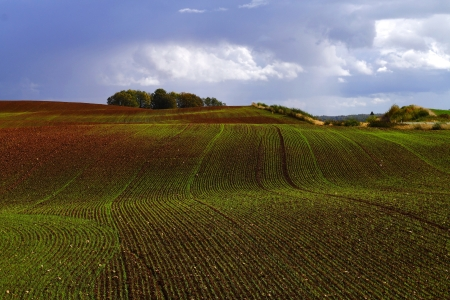 Large emerald field of winter cereals under the bright blue cloudy sky Stock Photo - 15731500